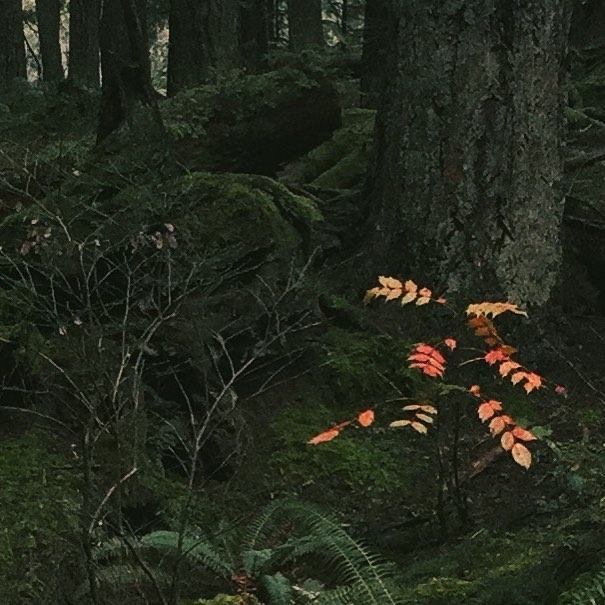 Caught_this_on_this_morning_s_walk.__favoritefinds__northvancouver__natureshots__beautifulnature