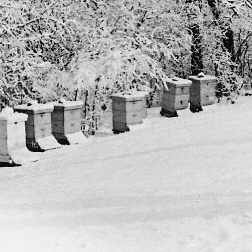 Our_beehives_in_the_late_70s._All_tucked_in_for_winter._The_beeswax_for_my_Paw_Wax_came_from_these_hives.__beehives__fearlessdiy__beesforhoney___unum - Copy