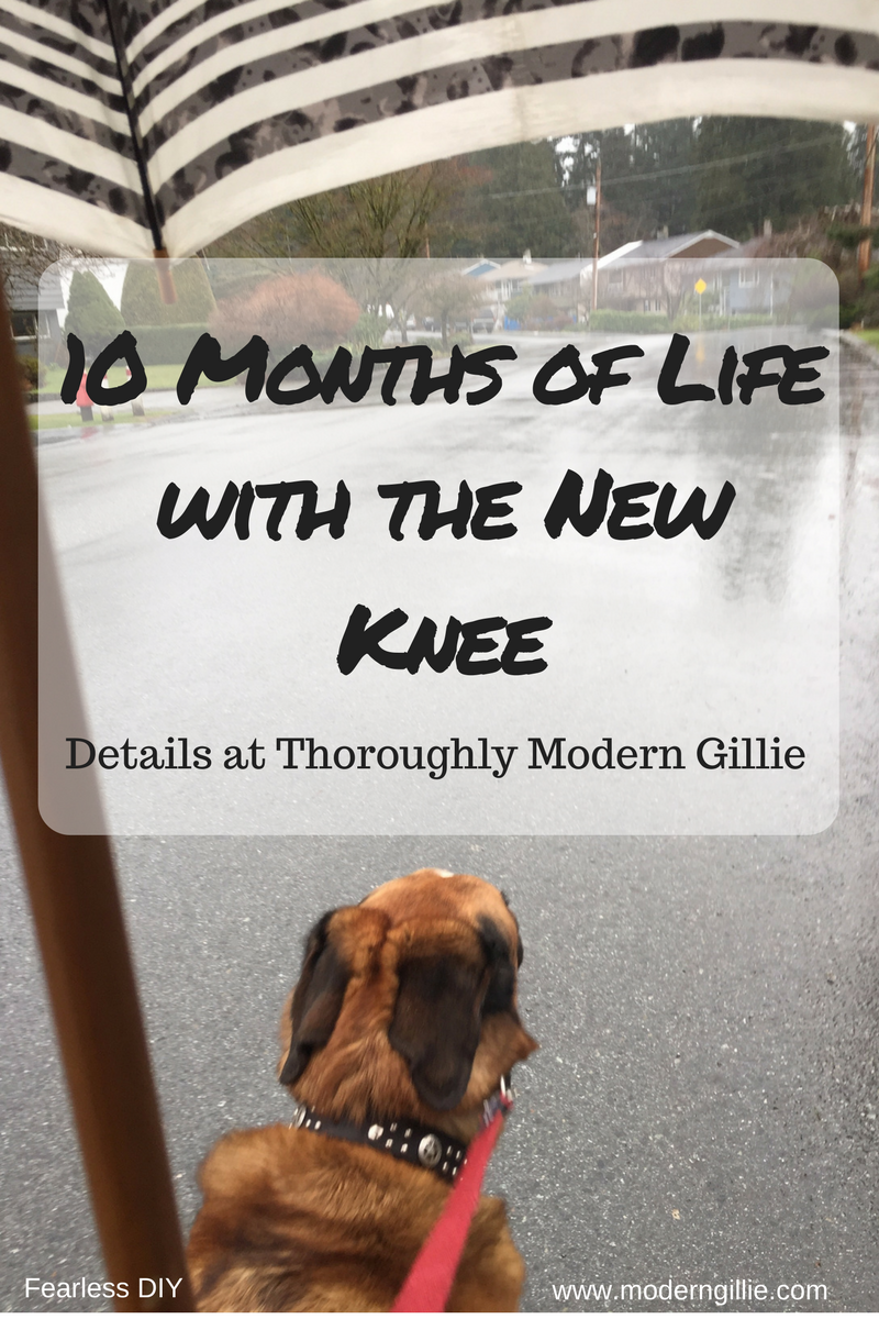 new knee,www.moderngillie.com